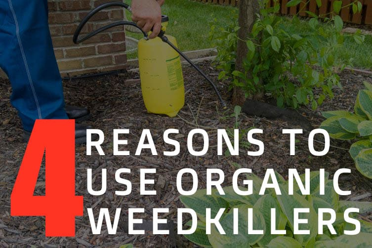 4 reasons to use organic weed killers