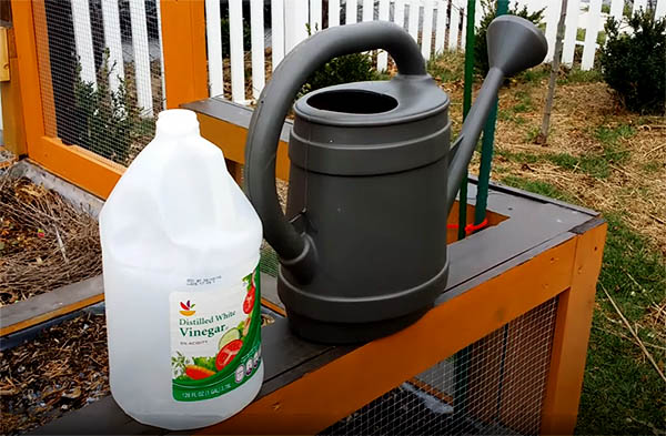 A plastic watering can next to a gallon of vinegar used for the homemade weed killer recipe